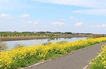 近くを流れる江戸川。地元のカヌークラブでは、江戸川下りを楽しめる。